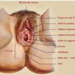 Zonas erógenas femeninas, más allá del clítoris