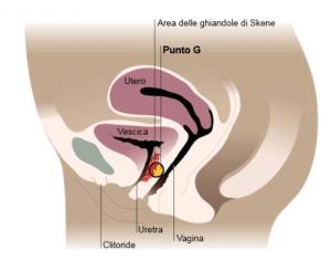 Dibujo en el que se muestra la ubicación del punto G